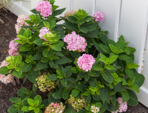 Tips for a Gorgeous Spring Yard
